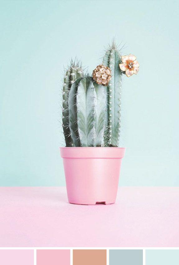 Inspiração do Dia | Flor Cactus