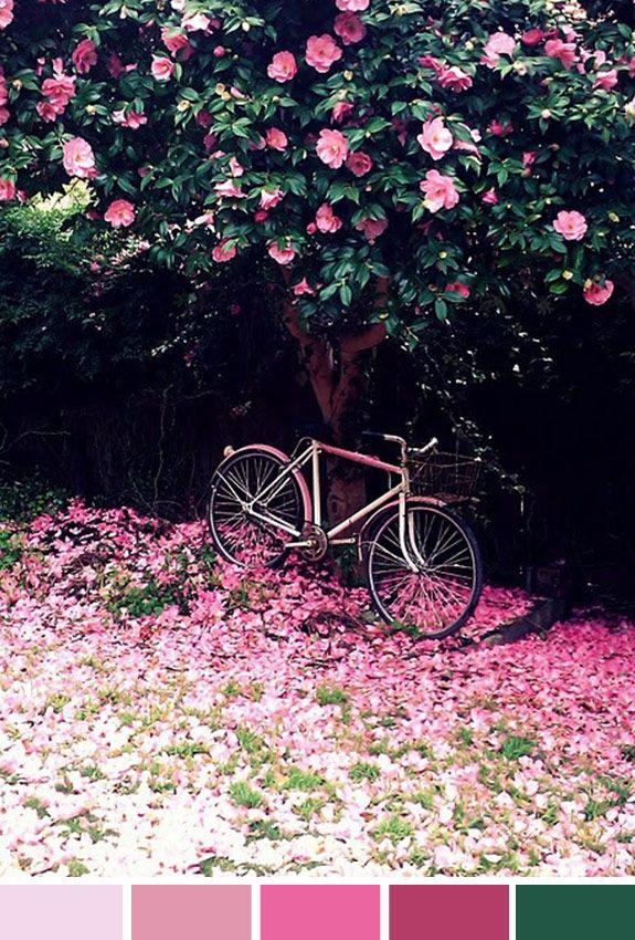 Achados da Bia | Inspiração do dia | Flores | Bicicleta | Passeio